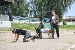 Чемпионат БОСКО 17.07.16. Показательные выступления.
