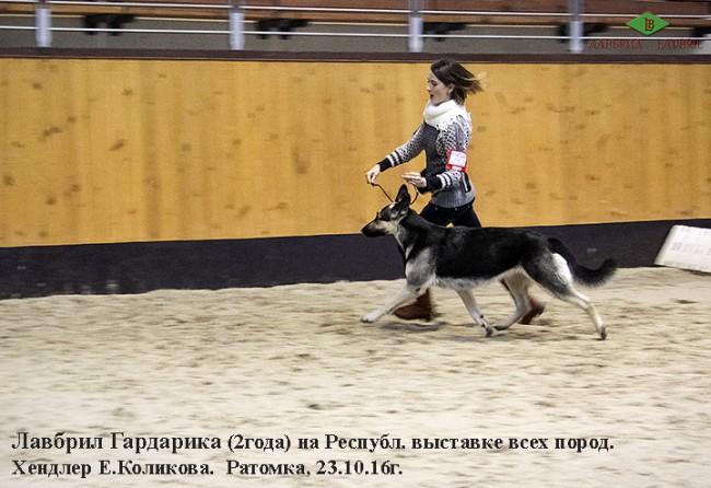 veo-lavbril-gardarika-i-hendler-e-kolikova-v-ringe-23-10-16