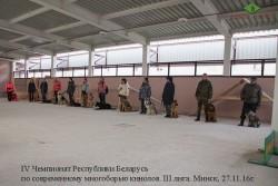 s-terenya-i-lavbril-eldar-na-chempionate-kinologov-27-11-16-10