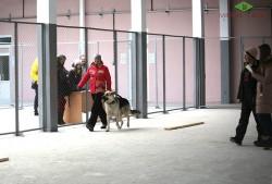 s-terenya-i-lavbril-eldar-na-chempionate-kinologov-27-11-16-3