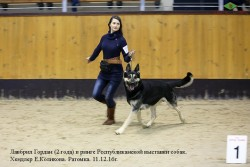 veo-lavbril-gordan-2goda-i-hendler-e-kolikova-v-ringe-ratomka-11-12-16g