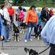 Мы и наши ВЕО на Республ. выставке собак, Дзержинск, 23.06.12.