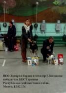 ВЕО Лавбрил Гордан, 2 года. BIG-1 Респ. выст.собак Минск,12.02.17г.