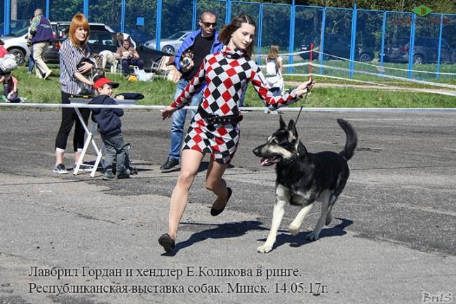 Лавбрил Гордан и Е.Коликова в ринге,14.05.17.