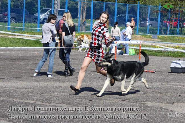Лавбрил Гордан и Е.Коликова. В ринге.14.05.17.