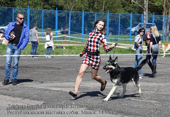 Лавбрил Гордан. Е.Коликова. В ринге.14.05.17.