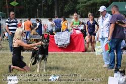 Лавбрил Брава (возр. 4года) в ринге Чемпионата ВЕО, 19.08.17.