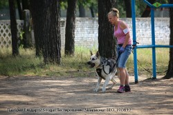 Лавбрил Ельдар. Тестир-е. Чемпионат ВЕО 19.08.17. (1)
