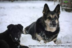 ВЕО Хельхаус Лавиния и Лавбрил Ивея. В снегу.