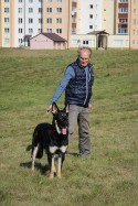 ДогФэст-2018. 06.10.18. Лавбрил Ирвинд. Фото Н.Подливахиной.