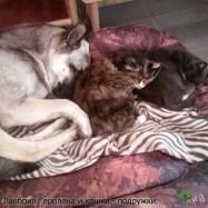 ВЕО Лавбрил Геролена и кошки - подружки.