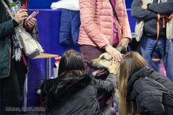 ВЕО Лавбрил Жадир. Зрители на Респ. выставке собак, 16.02.19