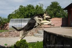 ВЕО Лавбрил Жессика (2 года), прыжок.