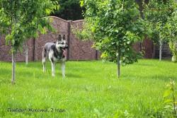 ВЕО Лавбрил Жессика (2 года). В саду.