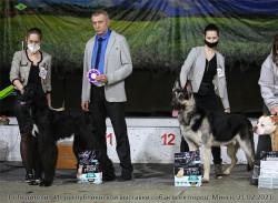 ВЕО Лавбрил Кортэз (17 мес), БИГ-2